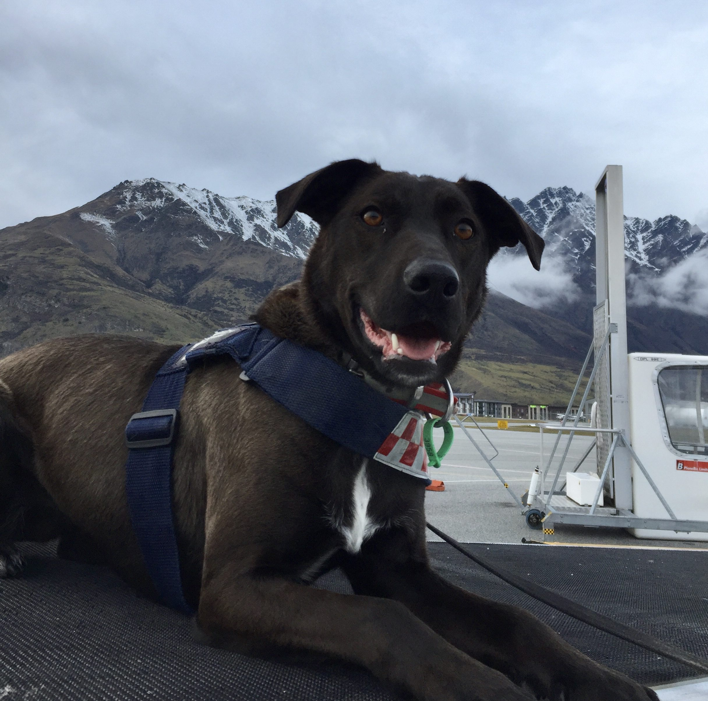SPCA dogs doing us proud | Southland Express